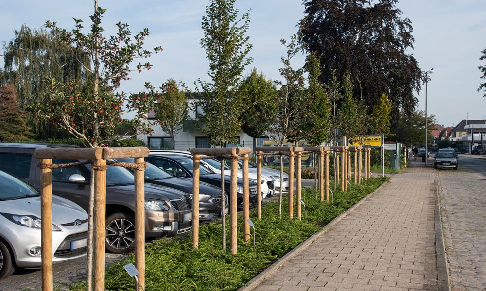 gepflanzte Jubiläumsbäume vorm PPS-Parkplatz